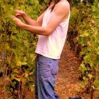 Harvesting :D