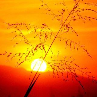 sun photograph 7