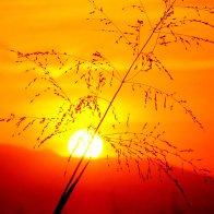sun-photograph-7