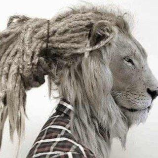 lionras