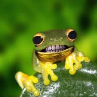 nice froggy nice froggy