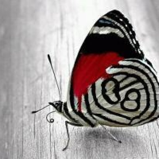 jazz butterfly