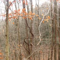 Dreadlock tree