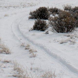 tire tracks.