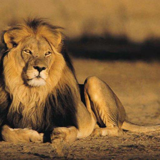 JAH LION 2013