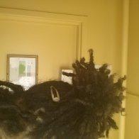 Loc ponytail.