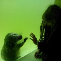 Playing with baby seals =)