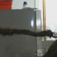 putting 8mm tibetan beads on my dreads