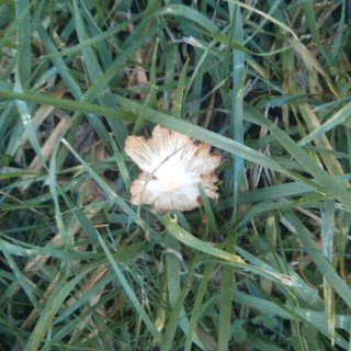 unknown mushroom 1 birds eye