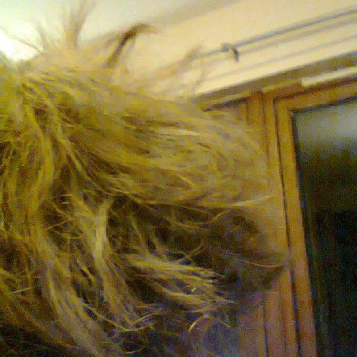 back of head 3 weeks old...