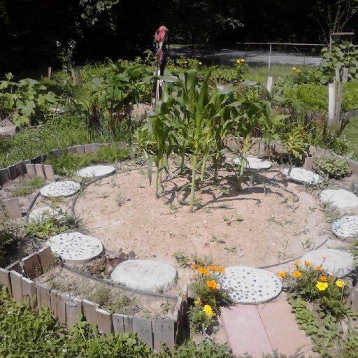 Three sisters garden.