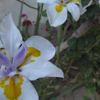 theres a bug on this flower see if you can find it