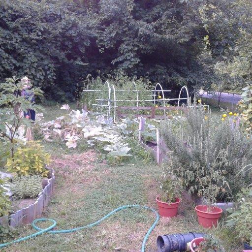Snapshot of my garden