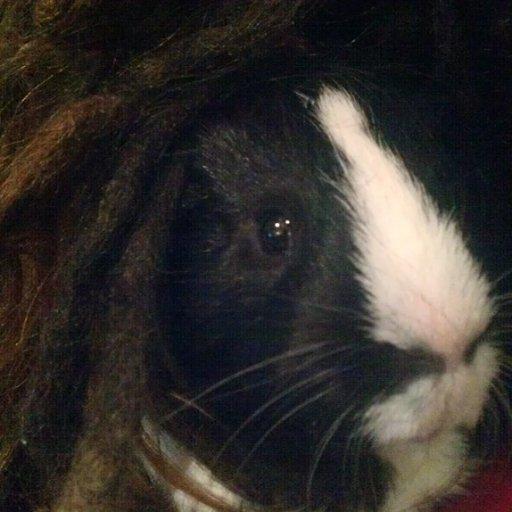 Guinea Pig dreads