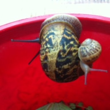 Crazy cut mumma and baby snail