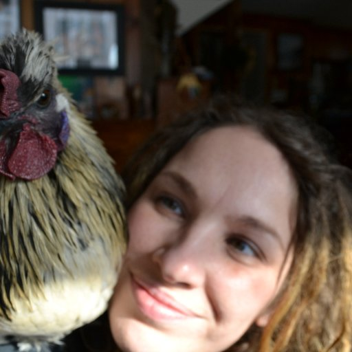 Raven my house chicken