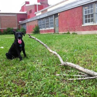 Jackson loves to play with sticks. It doesn't matter how big or small they are. Not even if they are still rooted in the ground.