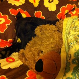 Sure we gave him the bear for the picture. But the bed is all his. Or so he thinks