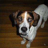 My doggie Wilson