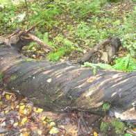 cool tree I found on my hike Sept 27 09 077