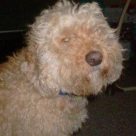 My dog Winston, he rules