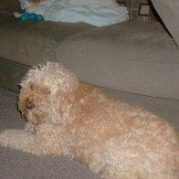 Winston again, sometimes he gets dreads :o)
