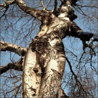 amazing tree. period