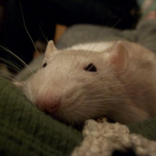 Lavender passed about 15 minutes after this photo was taken on December 26, 2009. She was an incredible friend to me.