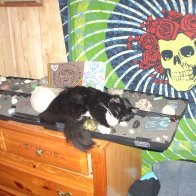 kansas sleeping with our crystals :)