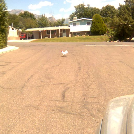 WHY...did the chicken cross the road?