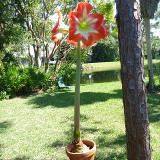 alongwaited blossom