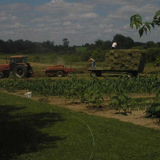 Farming in action