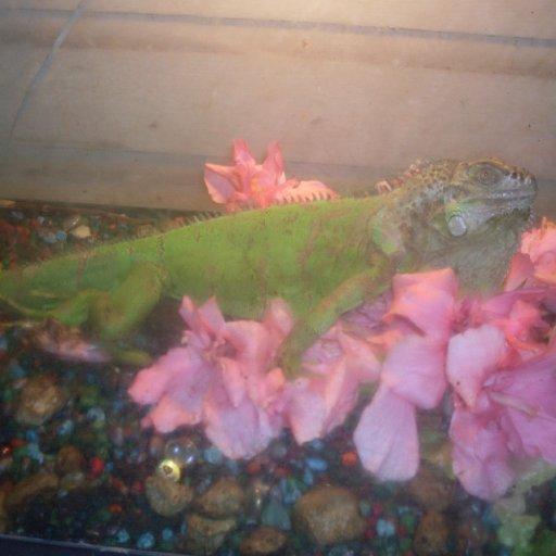 Lizard King~