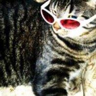 menou my kitty