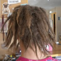 dreadlocks day 1,