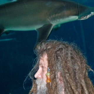 a hammerhead and a dreadhead