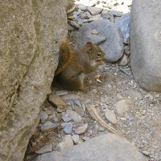 uber cute squirrel I saw hiking