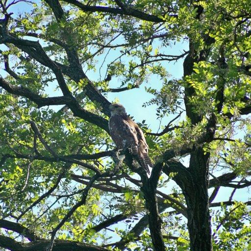 soaringeagles eagle friend