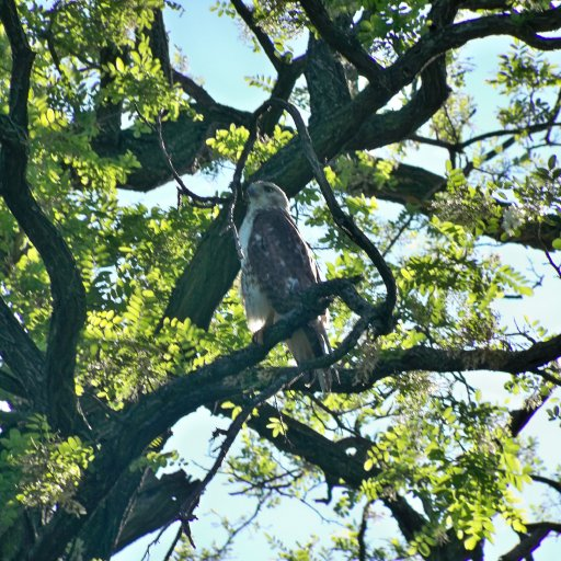 our friend the eagle
