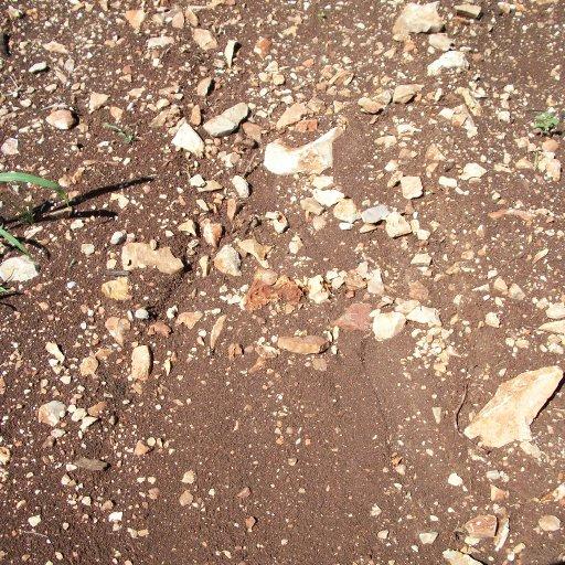 rich soil, rocks like bone.