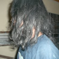 1 year and 1 1/2 months neglect, organic, free form dreadlock  Read more: 1 year and 1 1/2 months neglect, organic, free form dreadlock - dreadlocks forums http://www.dreadlockssite.com/photo/1-year-a