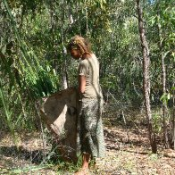 collecting pandanus