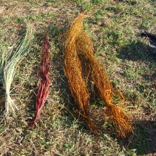 pandanus dyed form roots