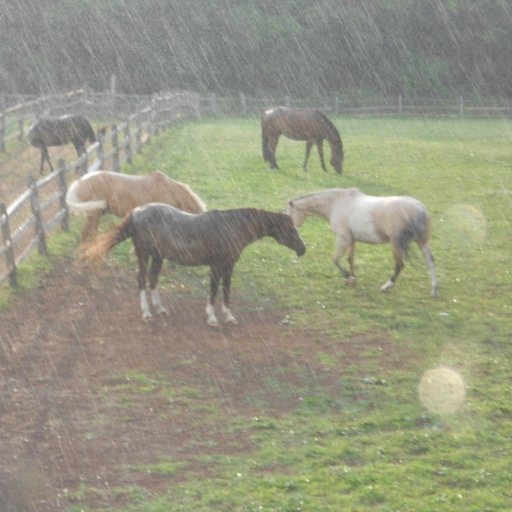 Horses love the rain apparently