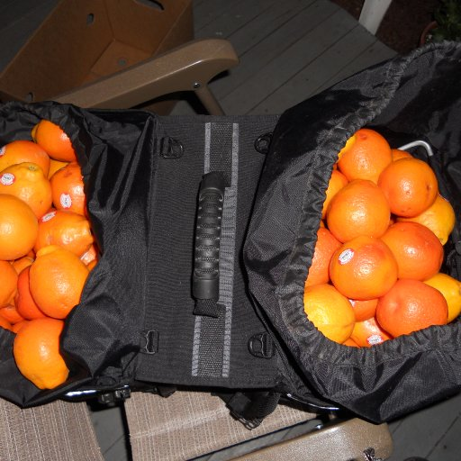 case of tangelos in my saddle bags