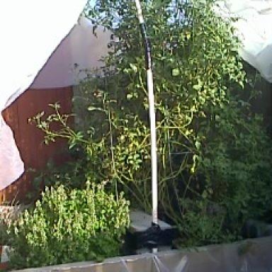 me garden