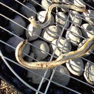 grilled snake
