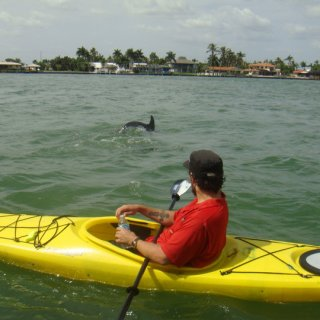 kayakin with dolphins