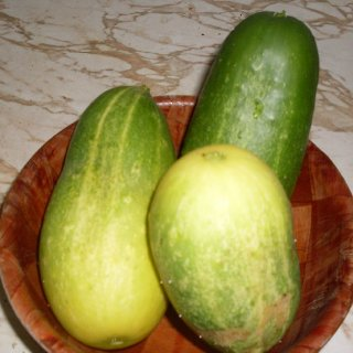My cucumbers from this summers garden :) Aug 2010