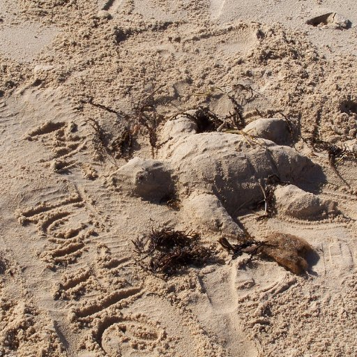 The sands of time - and Mr Turtle : )